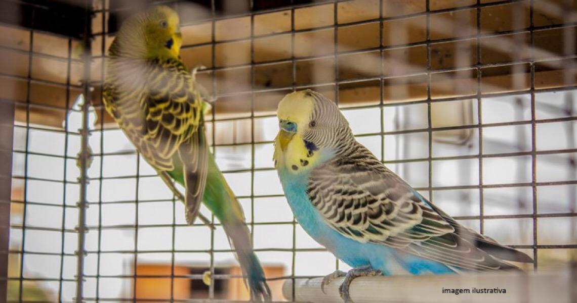 Criador de aves é multado e tem atividades suspensas por manter animais irregulares