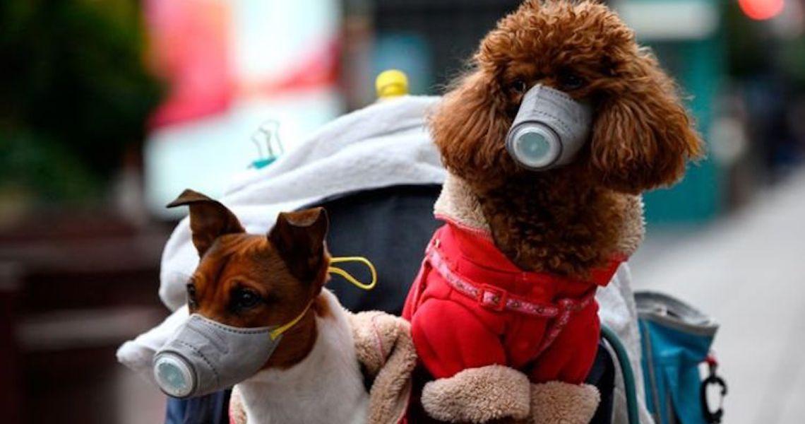Coronavírus e os pets