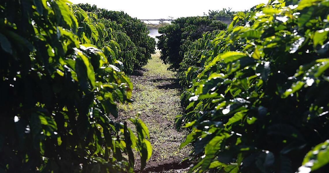 Coronavírus: Governo federal e agricultores garantem produção de alimentos