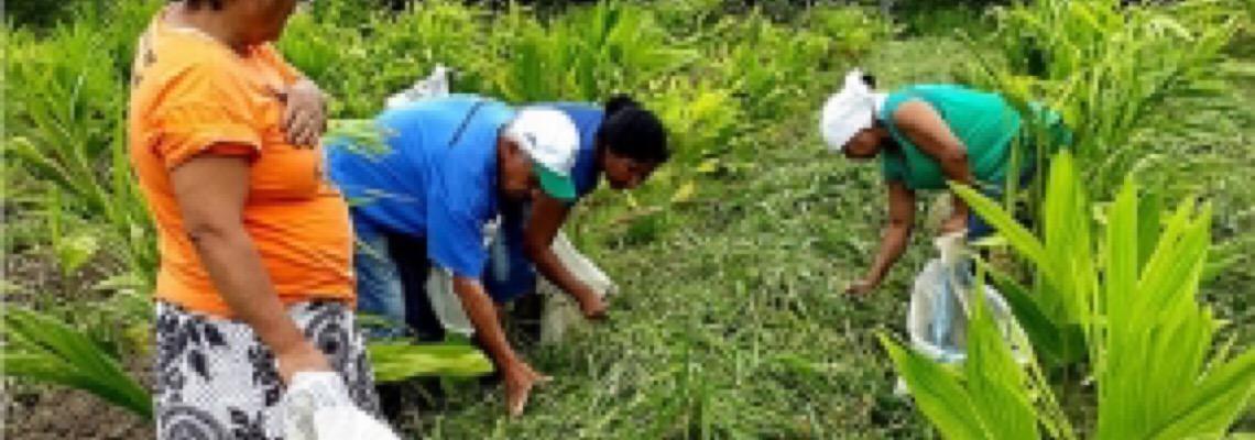 Com escolas fechadas, 38 toneladas de alimentos quilombolas para merenda têm destino incerto