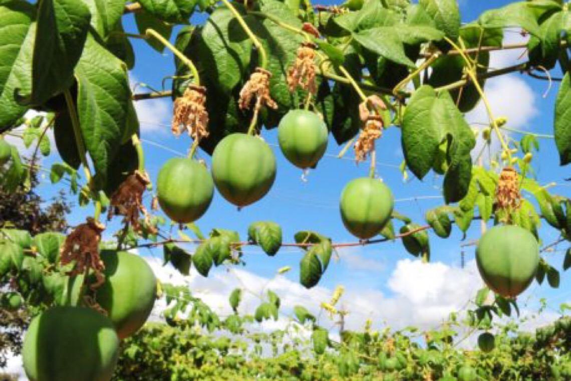 Área de produção orgânica cresce 150 hectares no Distrito Federal