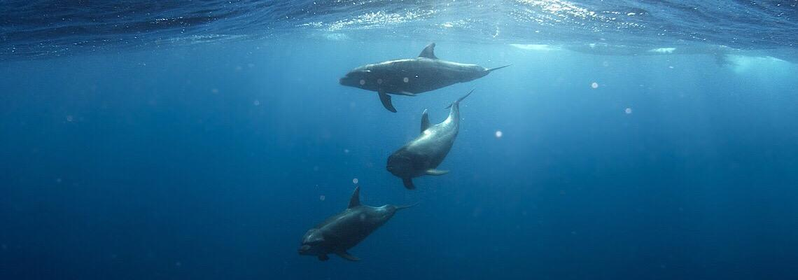 Golfinhos aparecem nas águas do porto de Cagliari, na Itália