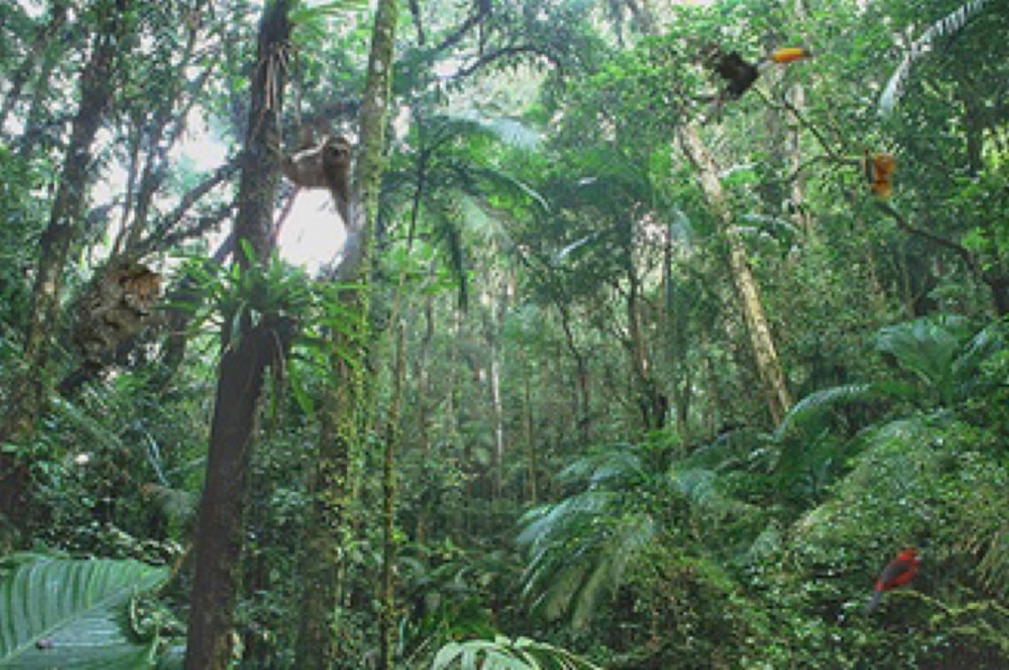 MPF cobra explicações sobre exonerações em bloco de Unidades de Conservação Ambiental