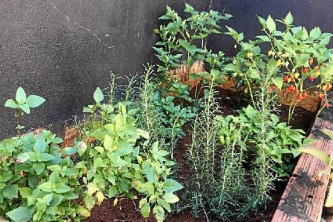 Manter uma horta em casa se mostra uma boa atividade em época de pandemia