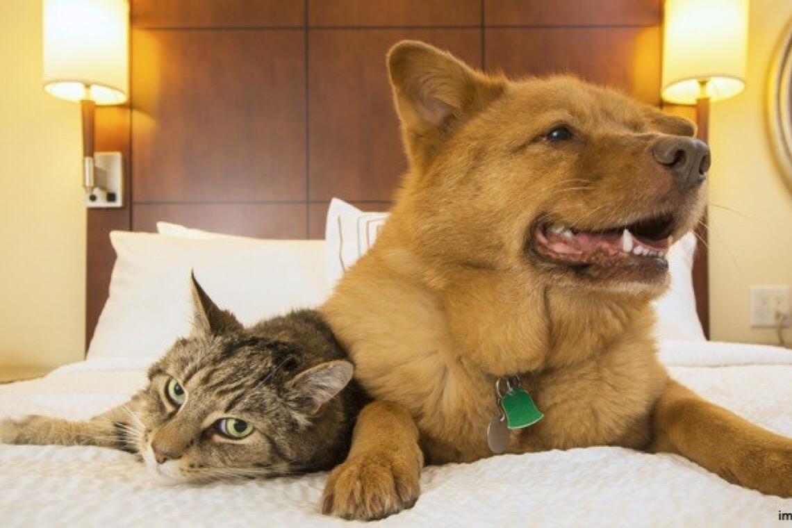 Justiça do DF veda serviço de hospedagem de animais em edifício residencial