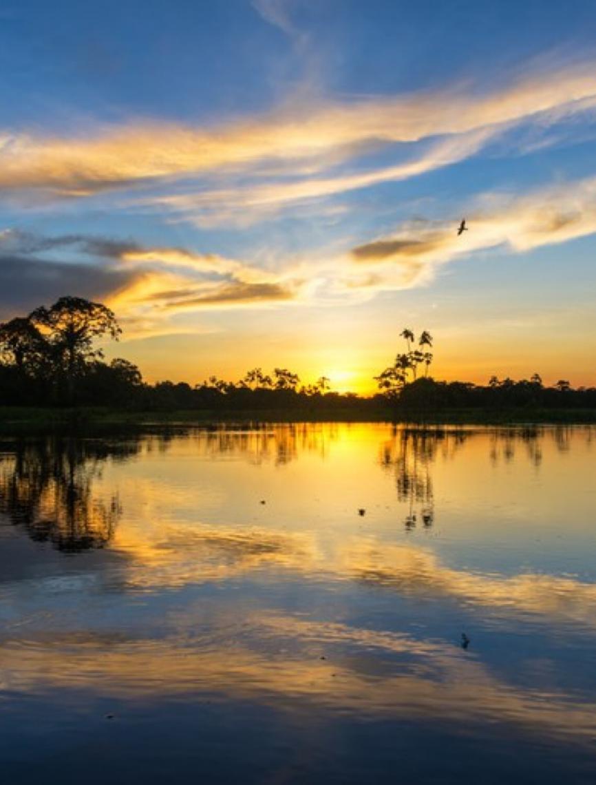 Site disponibiliza visita virtual à Amazônia