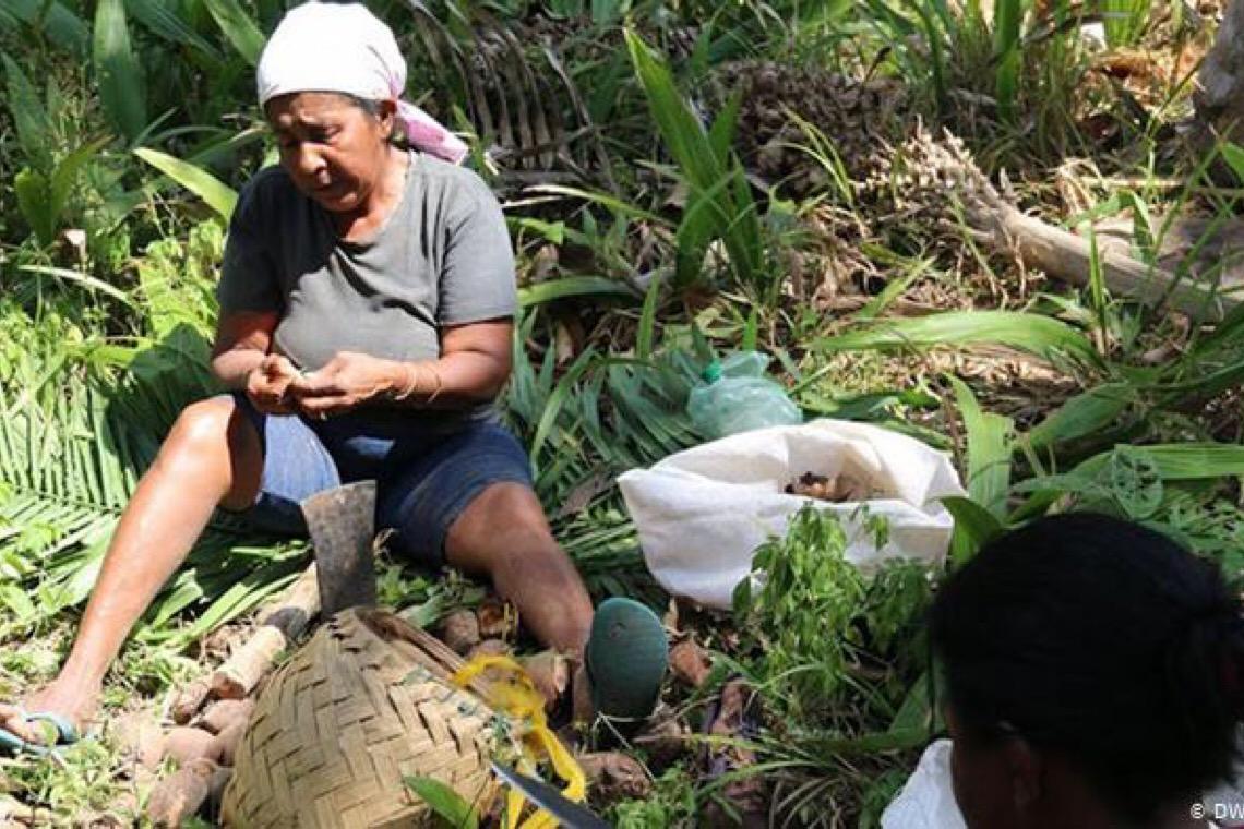 Pandemia sufoca agricultura familiar no Brasil