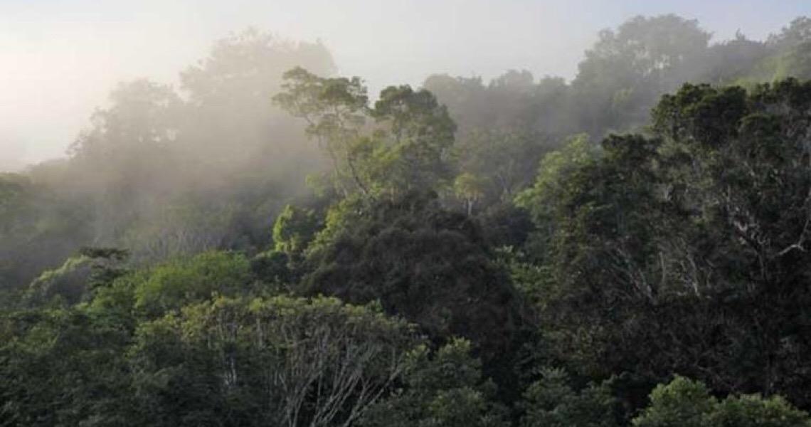 Pesquisadores identificam novos peixes em área preservada da Amazônia