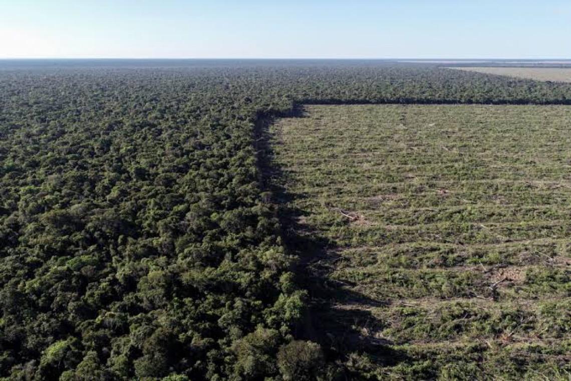 Tribunal bloqueia R$ 300 milhões de desmatadores da Amazônia