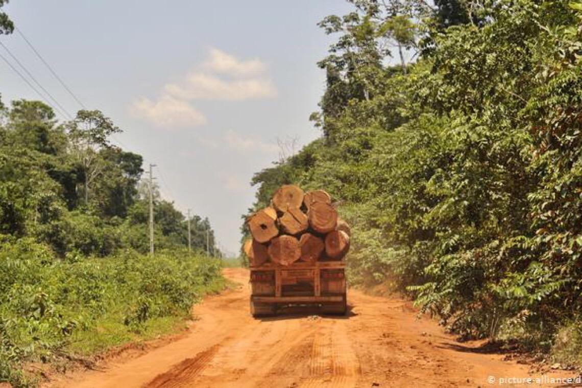 União Europeia quer boicote a produtos de áreas desmatadas