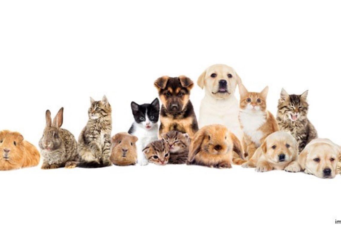 Corregedoria da Justiça do DF autoriza registro de animais de estimação pelos cartórios extrajudiciais
