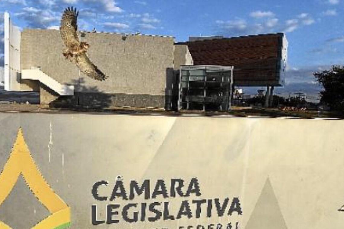 Dia decisivo na Câmara Legislativa
