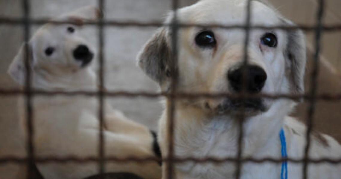 Em tempo de pandemia: Que tal adotar um cachorrinho?