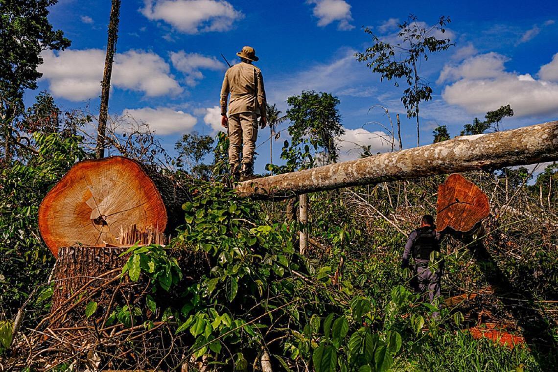 Desmatamento na Amazônia em junho é maior em 5 anos, apesar de ação militar e pressão externa
