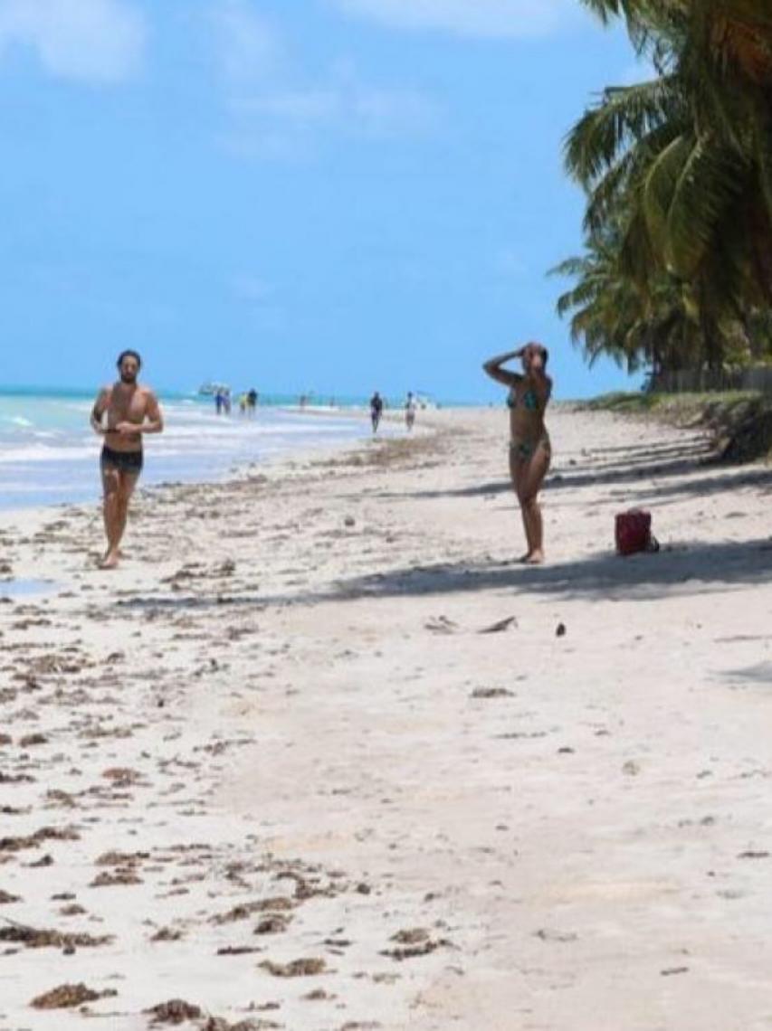 Praia de Maragogi:  Conheça esse paraíso no Brasil