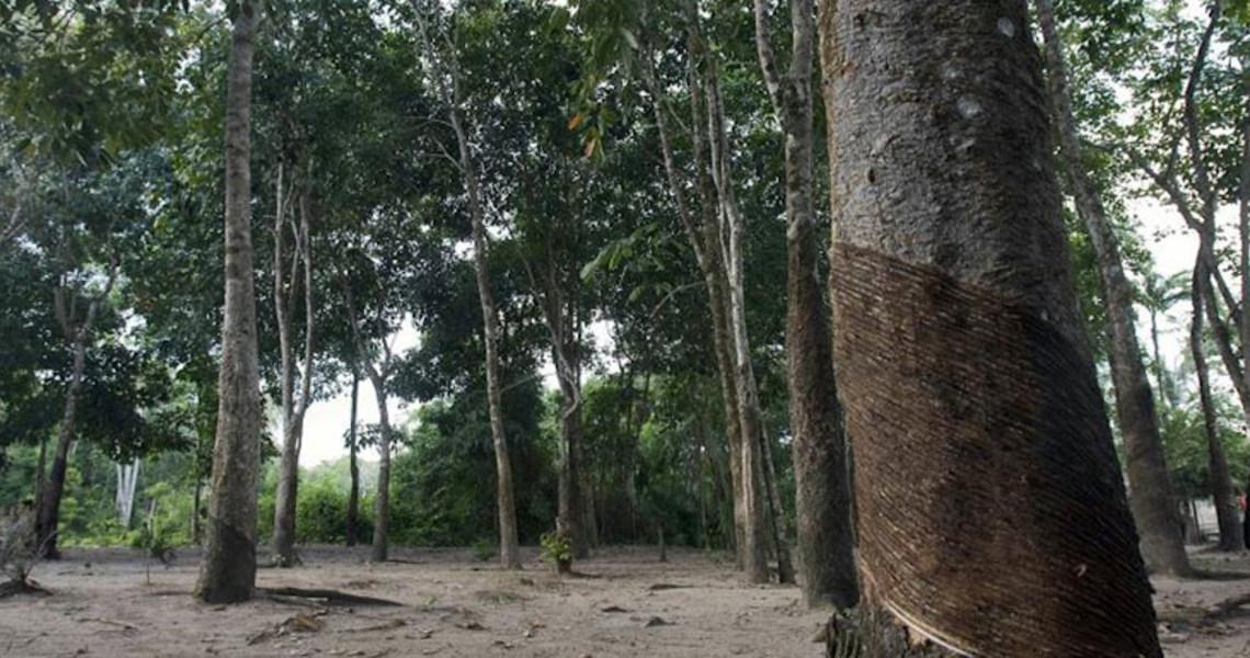 Famílias no Brasil plantam 200 mil árvores em memória das vítimas da Covid-19