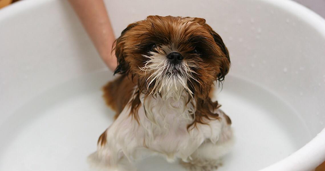 Hora do banho: Saiba quais cuidados deve ter no banho do seu pet