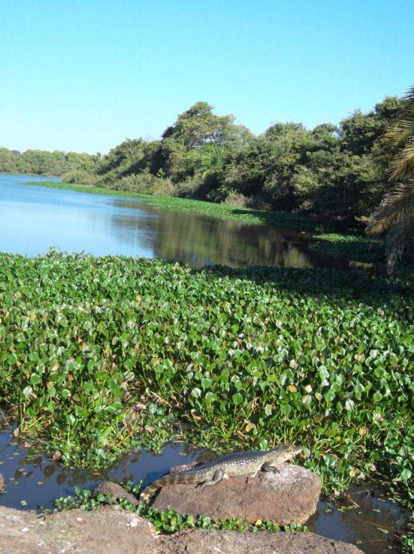 Refúgio Ecológico Caiman apresenta uma das mais plurais faunas e floras do mundo