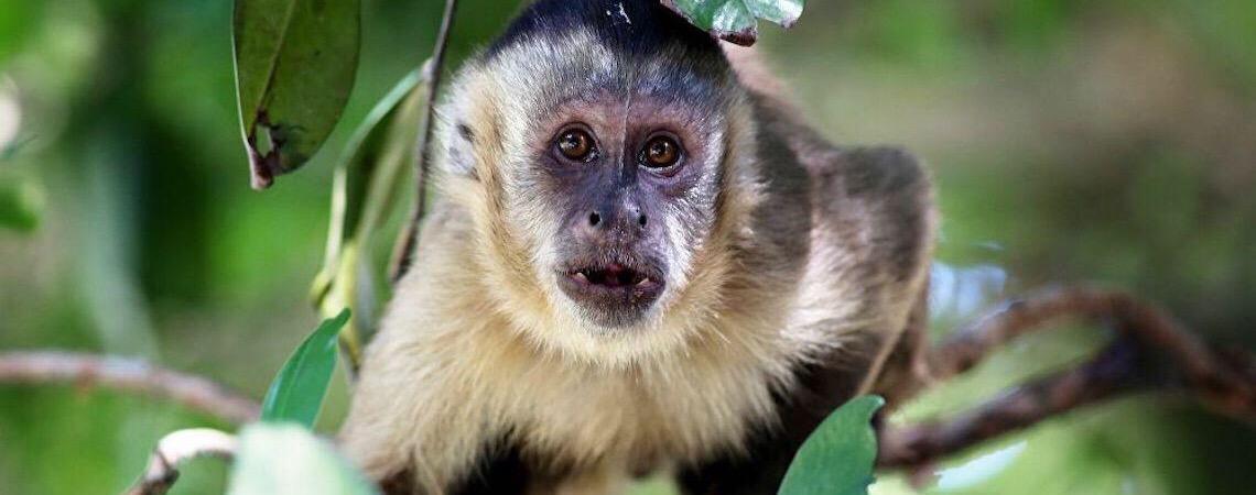 Em Portugal, macaco arranca dedo de menino de 5 anos em zoológico