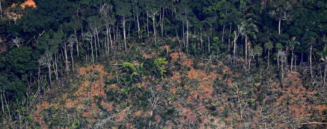 Noruega quer queda no desmatamento para reativar Fundo Amazônia