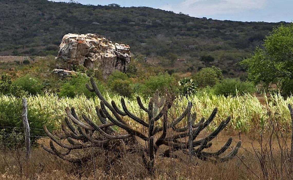 Caatinga precisa ser prioridade em agenda ambiental, defende pesquisador
