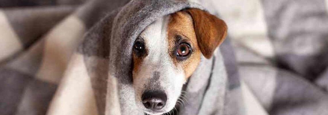 Inverno: Pets sofrem com baixas temperaturas e demandam cuidados especiais