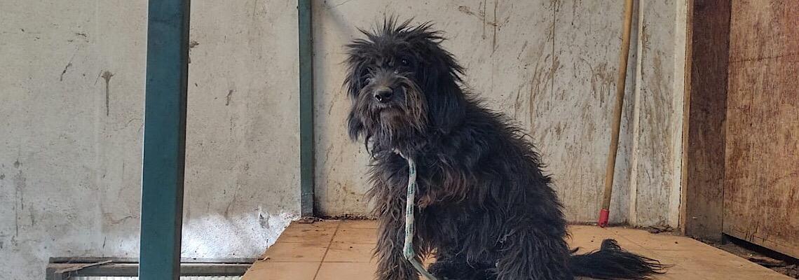 Brasília Ambiental em ação contra maus-tratos de animais