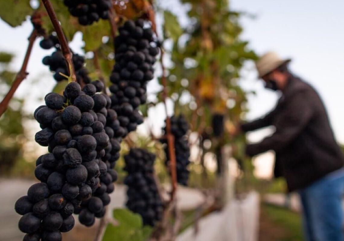 Feira da Uva e do Vinho começa nesta sexta-feira em Planaltina