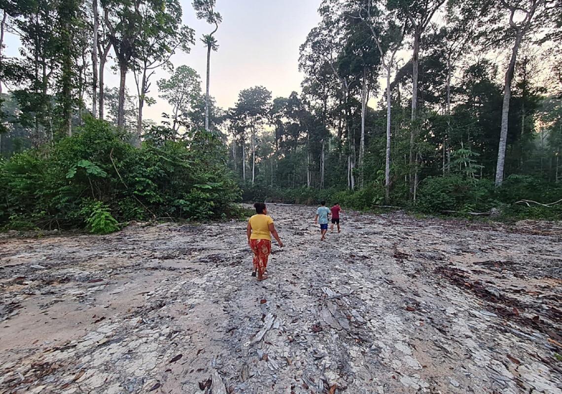 Expedição flagra desmatamento ilegal e ribeirinhos pedem nova reserva sustentável na Amazônia